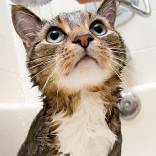 144334862-giving-cat-bath-632x475-1.jpg
